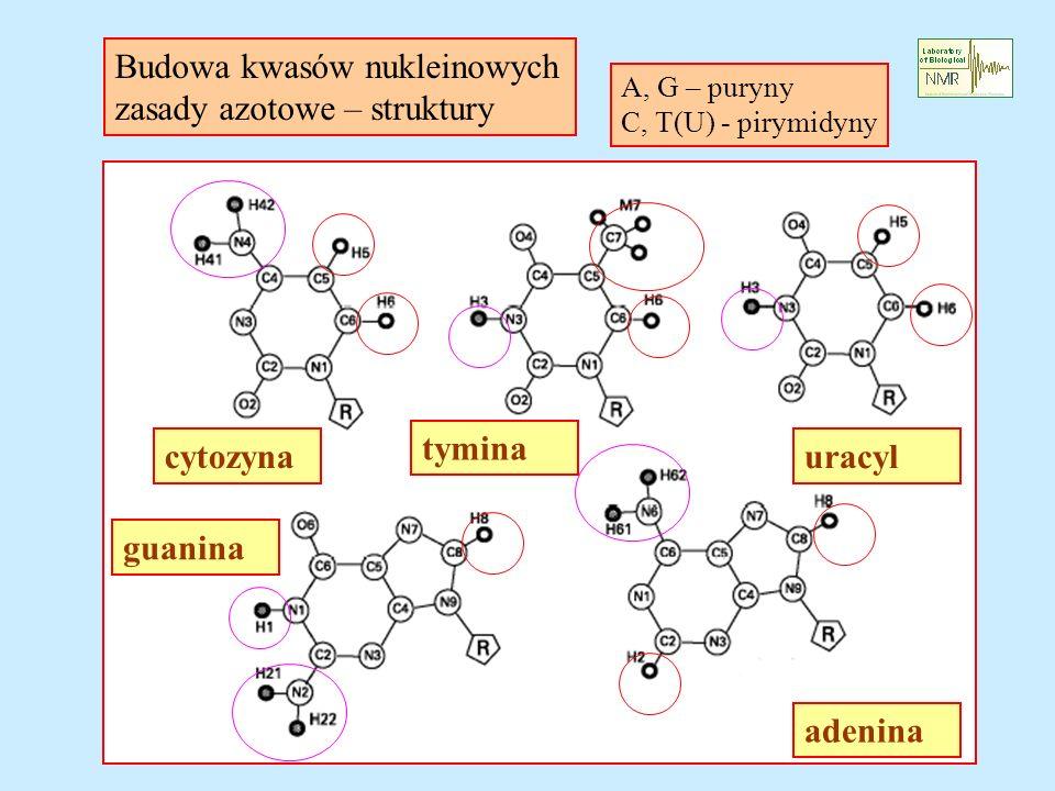 cytozyna tymina uracyl adenina guanina Budowa kwasów nukleinowych zasady azotowe – struktury A, G – puryny C, T(U) - pirymidyny