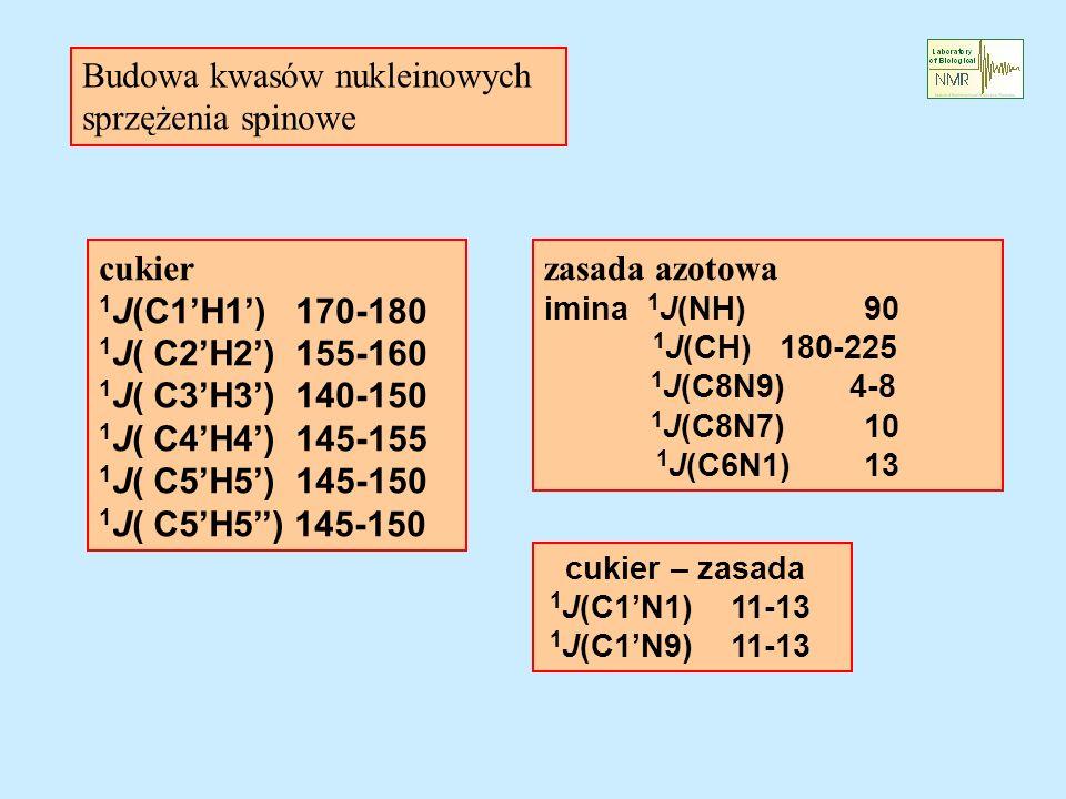 zasada azotowa imina 1 J(NH) 90 1 J(CH) 180-225 1 J(C8N9) 4-8 1 J(C8N7) 10 1 J(C6N1) 13 cukier 1 J(C1H1) 170-180 1 J( C2H2) 155-160 1 J( C3H3) 140-150 1 J( C4H4) 145-155 1 J( C5H5) 145-150 cukier – zasada 1 J(C1N1) 11-13 1 J(C1N9) 11-13 Budowa kwasów nukleinowych sprzężenia spinowe