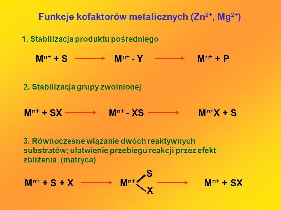 Funkcje kofaktorów metalicznych (Zn 2+, Mg 2+ ) 1. Stabilizacja produktu pośredniego M n+ + S M n+ - Y M n+ + P M n+ + SX M n+ - XS M n+ X + S 2. Stab