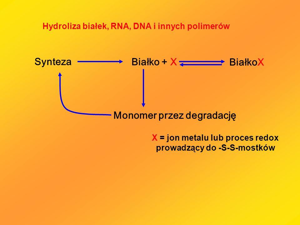 Synteza Monomer przez degradację Białko + X BiałkoX Hydroliza białek, RNA, DNA i innych polimerów X = jon metalu lub proces redox prowadzący do -S-S-m