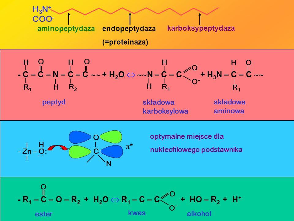 H 3 N + COO - aminopeptydaza endopeptydaza (=proteinaza) karboksypeptydaza - R 1 – C – O – R 2 + H 2 O R 1 – C – C + HO – R 2 + H + O O-O- O ester kwa