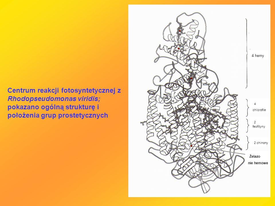 4 hemy Żelazo nie hemowe 2 chinony 2 feofityny 4 chlorofile Centrum reakcji fotosyntetycznej z Rhodopseudomonas viridis; pokazano ogólną strukturę i p