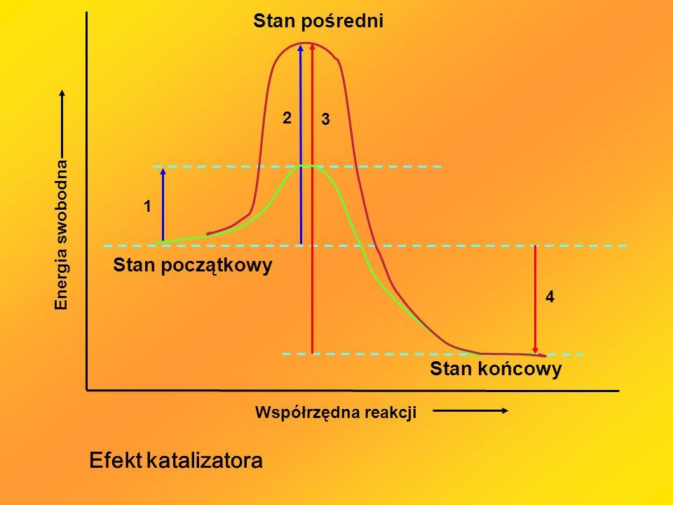 Kinetyczna analiza reakcji enzymatycznej 1.