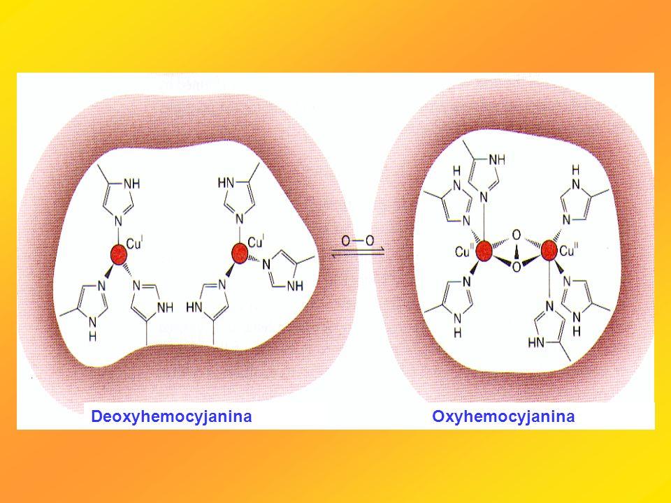 DeoxyhemocyjaninaOxyhemocyjanina