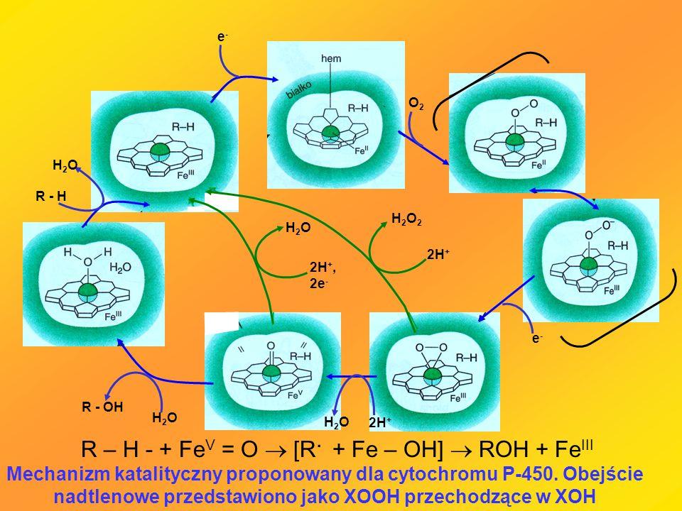Mechanizm katalityczny proponowany dla cytochromu P-450. Obejście nadtlenowe przedstawiono jako XOOH przechodzące w XOH R – H - + Fe V = O [R. + Fe –