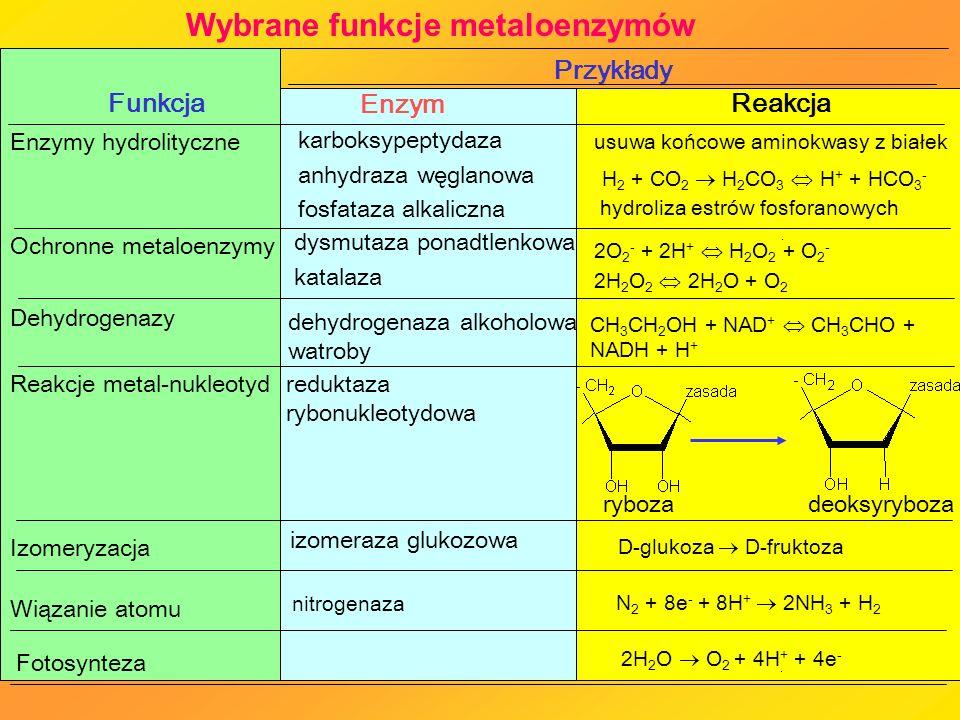 Wybrane funkcje metaloenzymów N 2 + 8e - + 8H + 2NH 3 + H 2 Wiązanie atomu nitrogenaza izomeraza glukozowa Izomeryzacja usuwa końcowe aminokwasy z bia