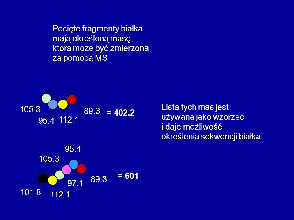 95.4 89.3 112.1 105.3 = 402.2 95.4 89.3 112.1 105.3 97.1 101.8 = 601 Pocięte fragmenty białka mają określoną masę, która może być zmierzona za pomocą