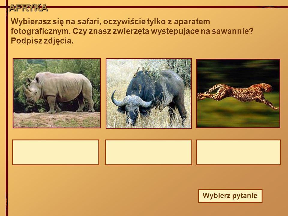 AFRYKAAFRYKAAFRYKA Wybierasz się na safari, oczywiście tylko z aparatem fotograficznym. Czy znasz zwierzęta występujące na sawannie? Podpisz zdjęcia.