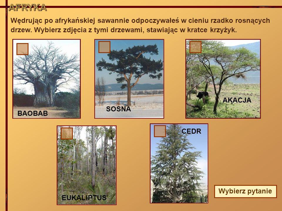 AFRYKA Wędrując po afrykańskiej sawannie odpoczywałeś w cieniu rzadko rosnących drzew. Wybierz zdjęcia z tymi drzewami, stawiając w kratce krzyżyk. BA
