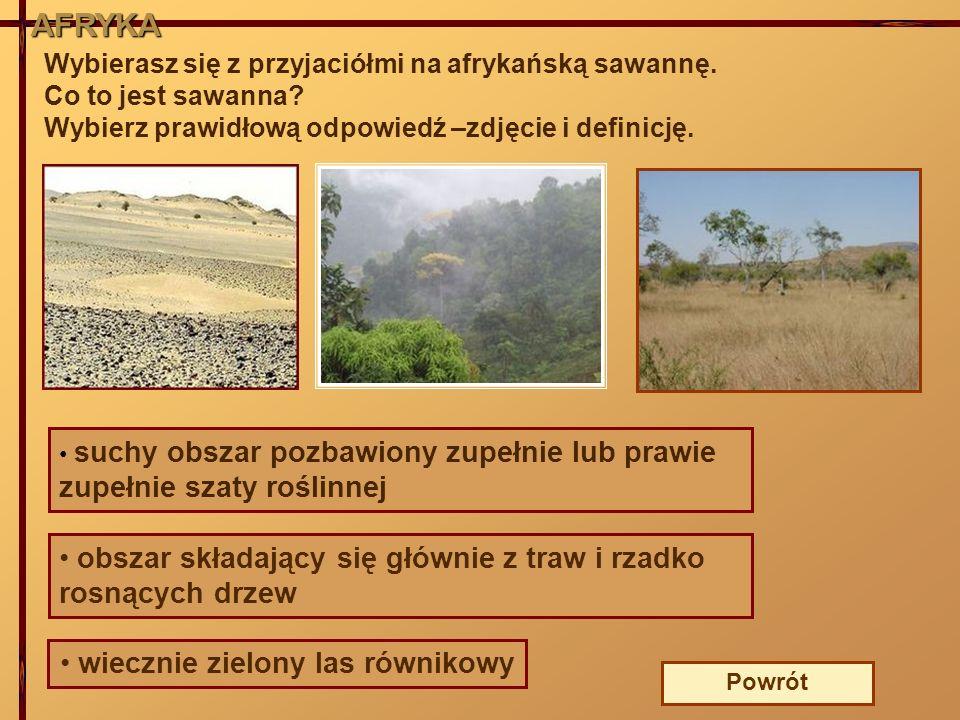 Wybierasz się z przyjaciółmi na afrykańską sawannę. Co to jest sawanna? Wybierz prawidłową odpowiedź –zdjęcie i definicję. suchy obszar pozbawiony zup
