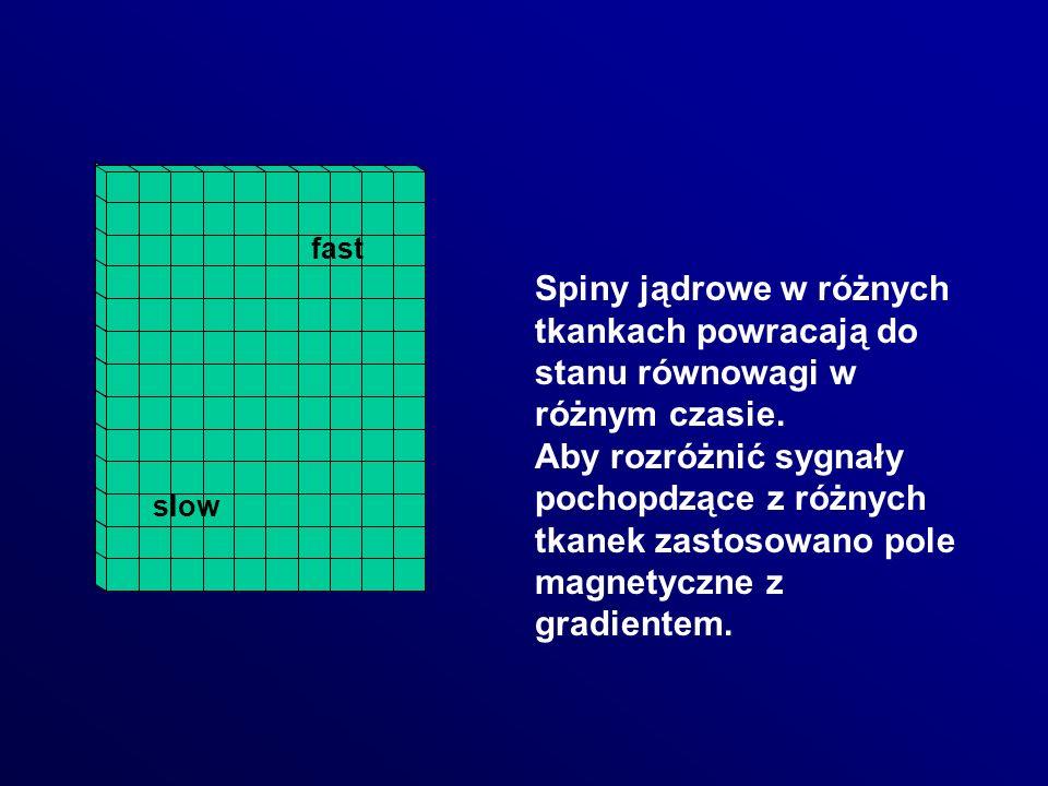 Spiny jądrowe w różnych tkankach powracają do stanu równowagi w różnym czasie. Aby rozróżnić sygnały pochopdzące z różnych tkanek zastosowano pole mag