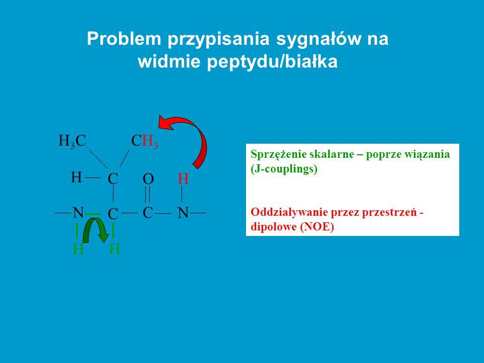Problem przypisania sygnałów na widmie peptydu/białka N H C H CN OH CH3CH3 C H H3CH3C Sprzężenie skalarne – poprze wiązania (J-couplings) Oddziaływani