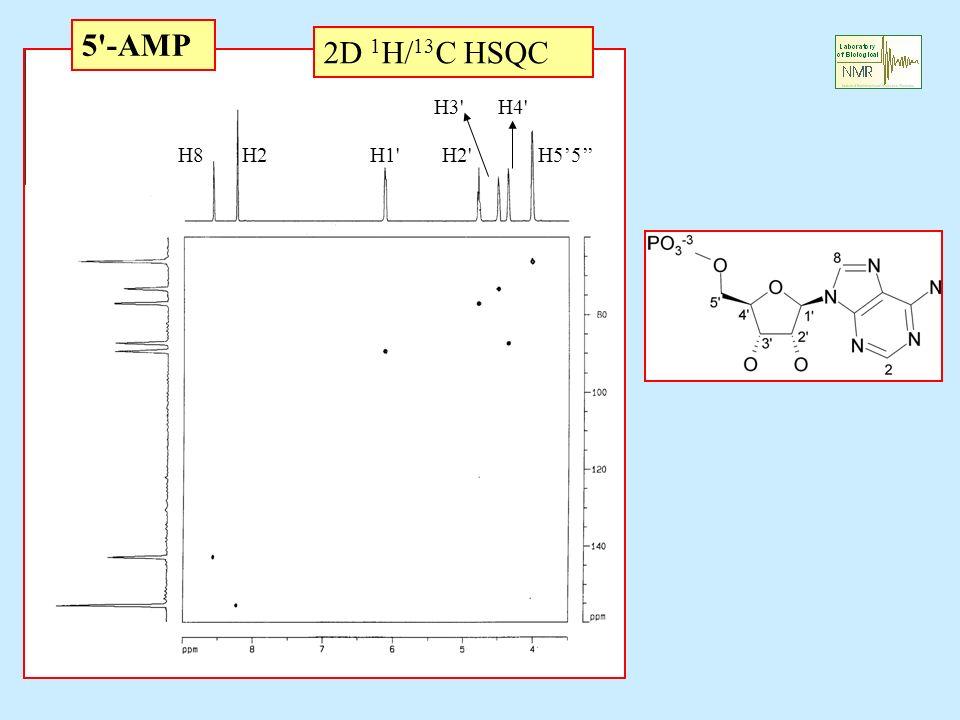 5'-AMP 2D 1 H/ 13 C HSQC H1'H2'H55 H3'H4' H2H8