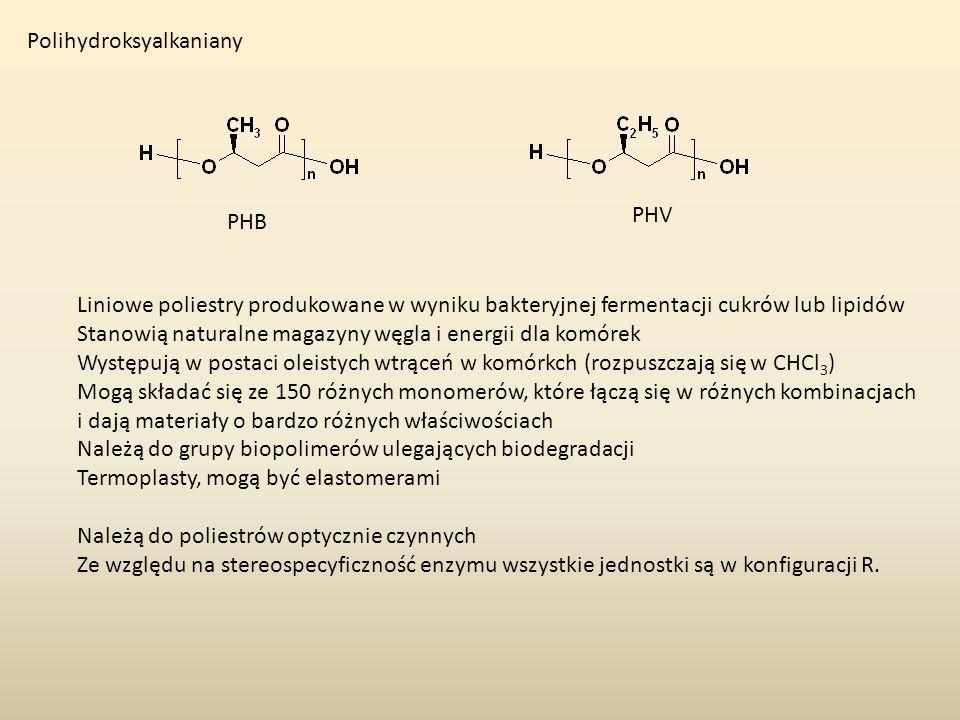 Polihydroksyalkaniany PHB PHV Liniowe poliestry produkowane w wyniku bakteryjnej fermentacji cukrów lub lipidów Stanowią naturalne magazyny węgla i en