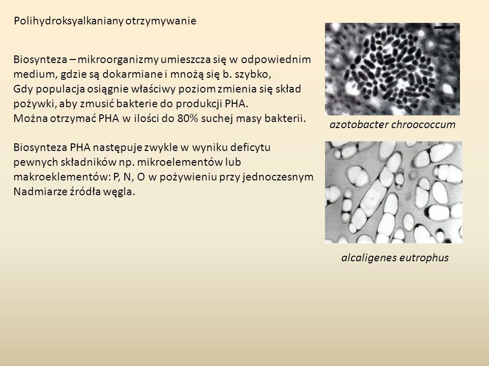 Polihydroksyalkaniany otrzymywanie azotobacter chroococcum Biosynteza – mikroorganizmy umieszcza się w odpowiednim medium, gdzie są dokarmiane i mnożą