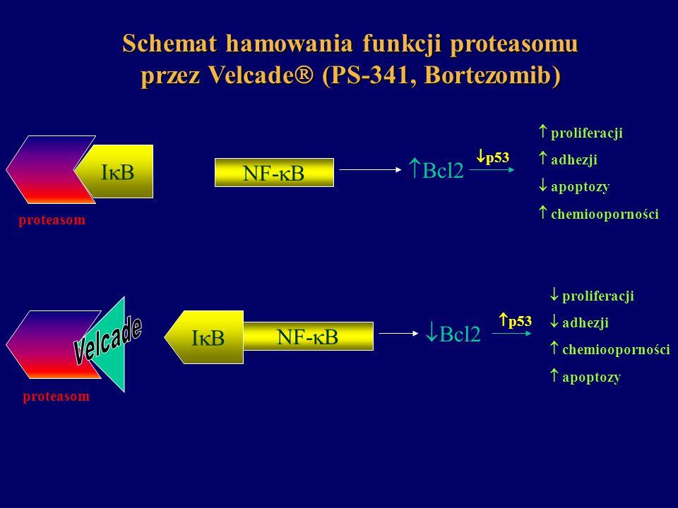 Schemat hamowania funkcji proteasomu przez Velcade (PS-341, Bortezomib) I B proteasom NF- B Bcl2 proliferacji adhezji apoptozy chemiooporności prolife