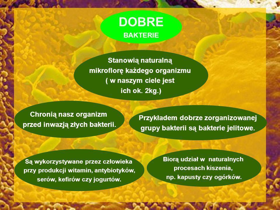 DOBRE BAKTERIE Stanowią naturalną mikroflorę każdego organizmu ( w naszym ciele jest ich ok. 2kg.) Przykładem dobrze zorganizowanej grupy bakterii są
