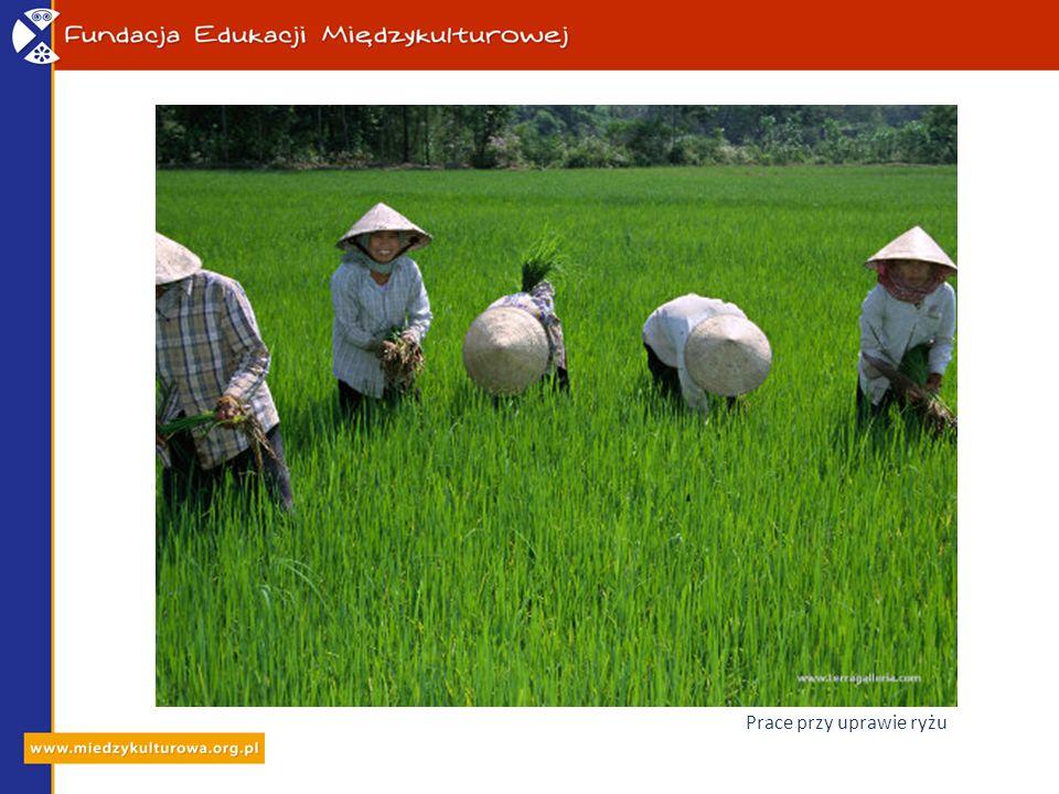 Prace przy uprawie ryżu