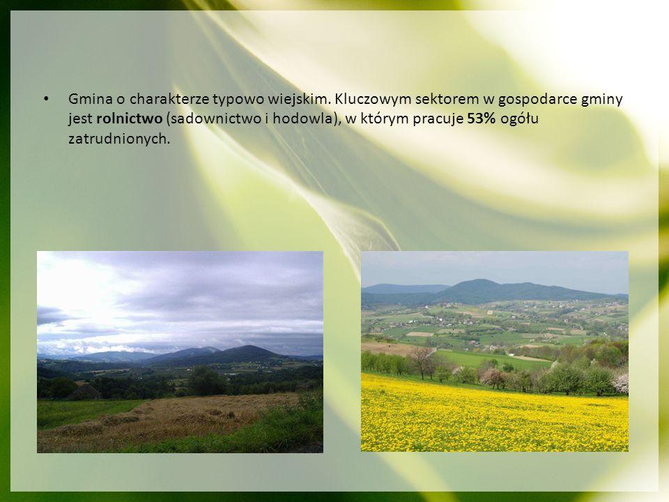 Gmina o charakterze typowo wiejskim. Kluczowym sektorem w gospodarce gminy jest rolnictwo (sadownictwo i hodowla), w którym pracuje 53% ogółu zatrudni