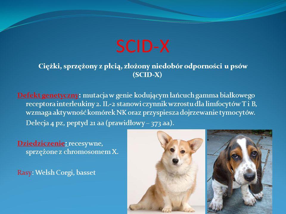 SCID-X Ciężki, sprzężony z płcią, złożony niedobór odporności u psów (SCID-X) Defekt genetyczny: mutacja w genie kodującym łańcuch gamma białkowego re