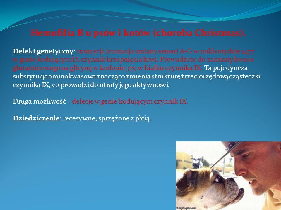 Hemofilia B u psów i kotów (choroba Christmas). Defekt genetyczny: tranzycja (mutacja zmiany sensu) A-G w nukleotydzie 1477 w genie kodującym IX czynn