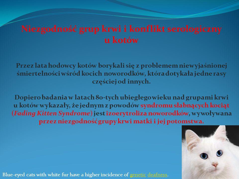 Niezgodność grup krwi i konflikt serologiczny u kotów Przez lata hodowcy kotów borykali się z problemem niewyjaśnionej śmiertelności wśród kocich nowo