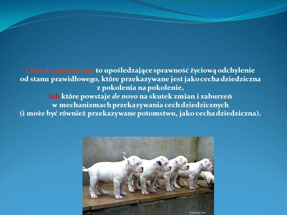 Hiperlipoproteinemia I u psów.Niedobór lipazy lipoproteinowej.