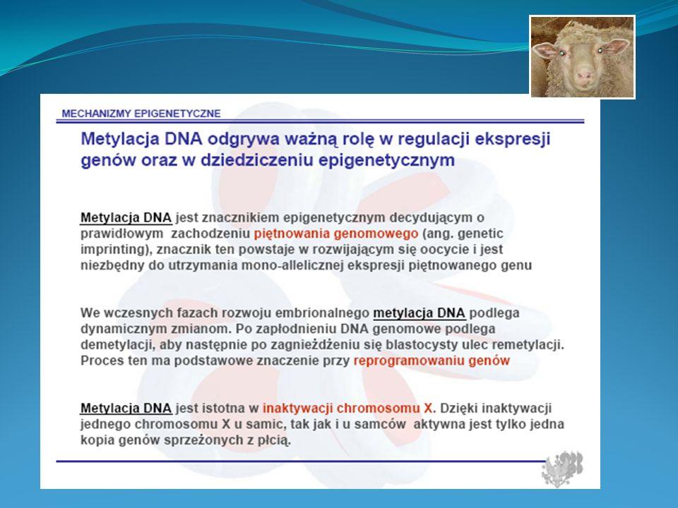 ZESPÓŁ ALPORTA Defekt genetyczny: Mutacja w 35 eksonie genu (COL4A5) kodującego łańcuch alfa 5 kolagenu typu IV.