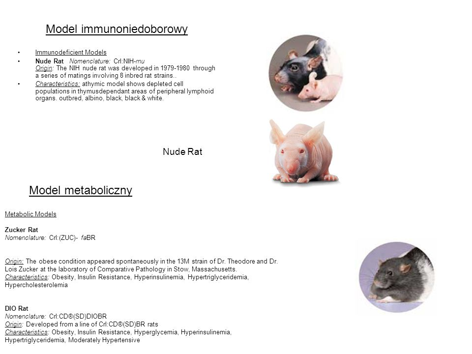 Model immunoniedoborowy Immunodeficient Models Nude Rat Nomenclature: Crl:NIH-rnu Origin: The NIH nude rat was developed in 1979-1980 through a series