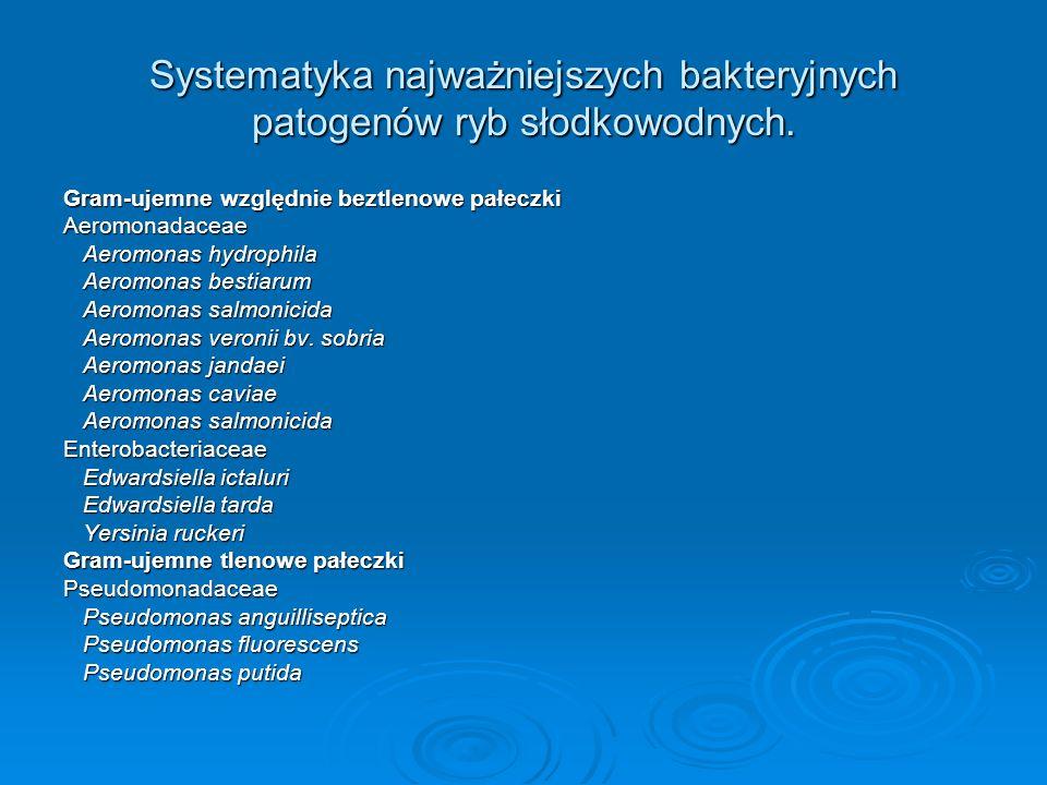 Systematyka najważniejszych bakteryjnych patogenów ryb słodkowodnych. Gram-ujemne względnie beztlenowe pałeczki Aeromonadaceae Aeromonas hydrophila Ae
