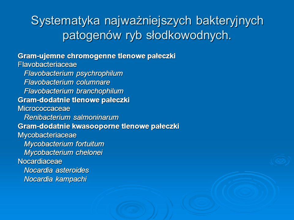 Systematyka najważniejszych bakteryjnych patogenów ryb słodkowodnych. Gram-ujemne chromogenne tlenowe pałeczki Flavobacteriaceae Flavobacterium psychr