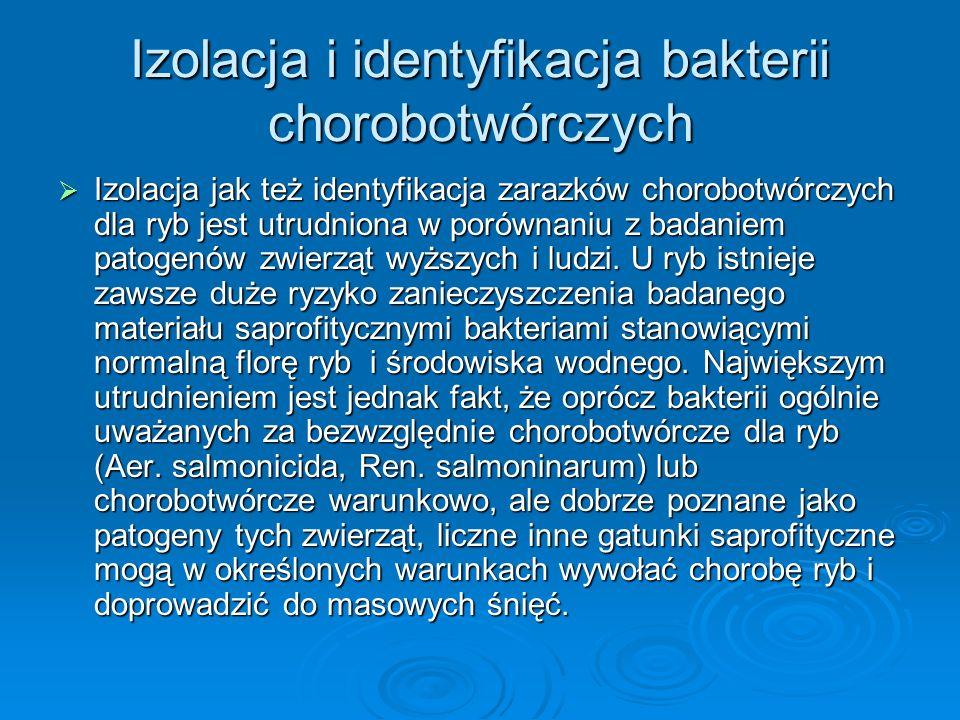 Izolacja i identyfikacja bakterii chorobotwórczych Izolacja jak też identyfikacja zarazków chorobotwórczych dla ryb jest utrudniona w porównaniu z bad