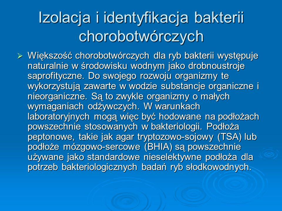 Izolacja i identyfikacja bakterii chorobotwórczych Większość chorobotwórczych dla ryb bakterii występuje naturalnie w środowisku wodnym jako drobnoust