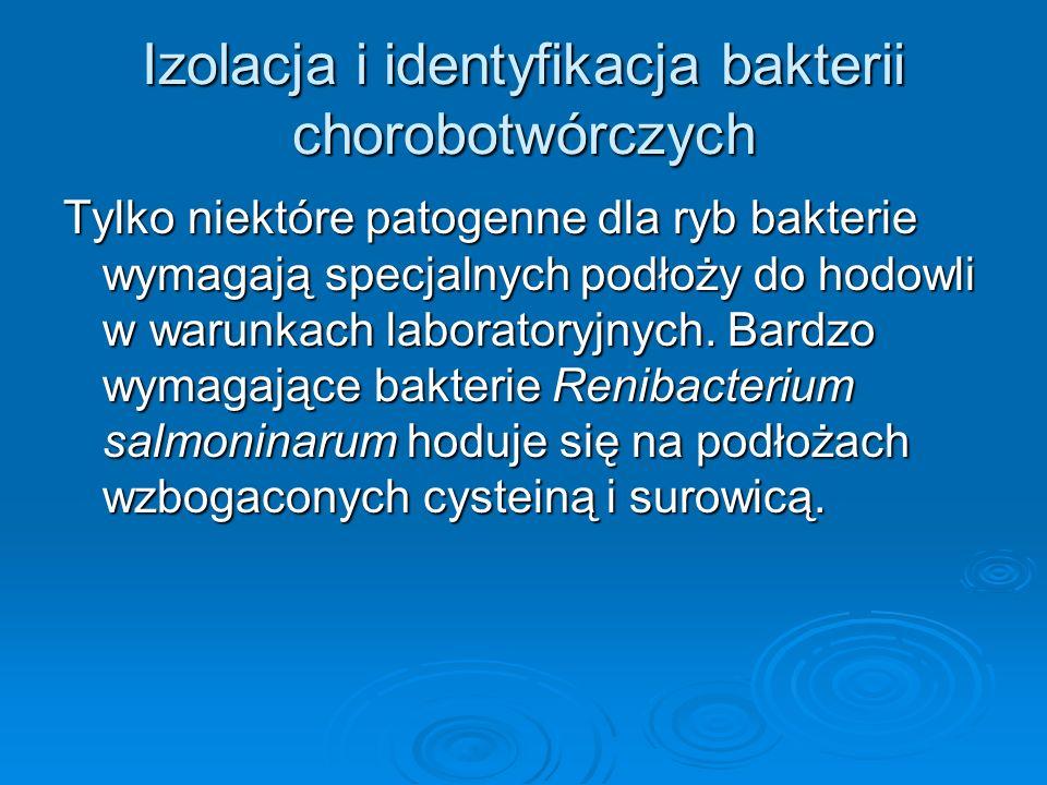 Izolacja i identyfikacja bakterii chorobotwórczych Tylko niektóre patogenne dla ryb bakterie wymagają specjalnych podłoży do hodowli w warunkach labor