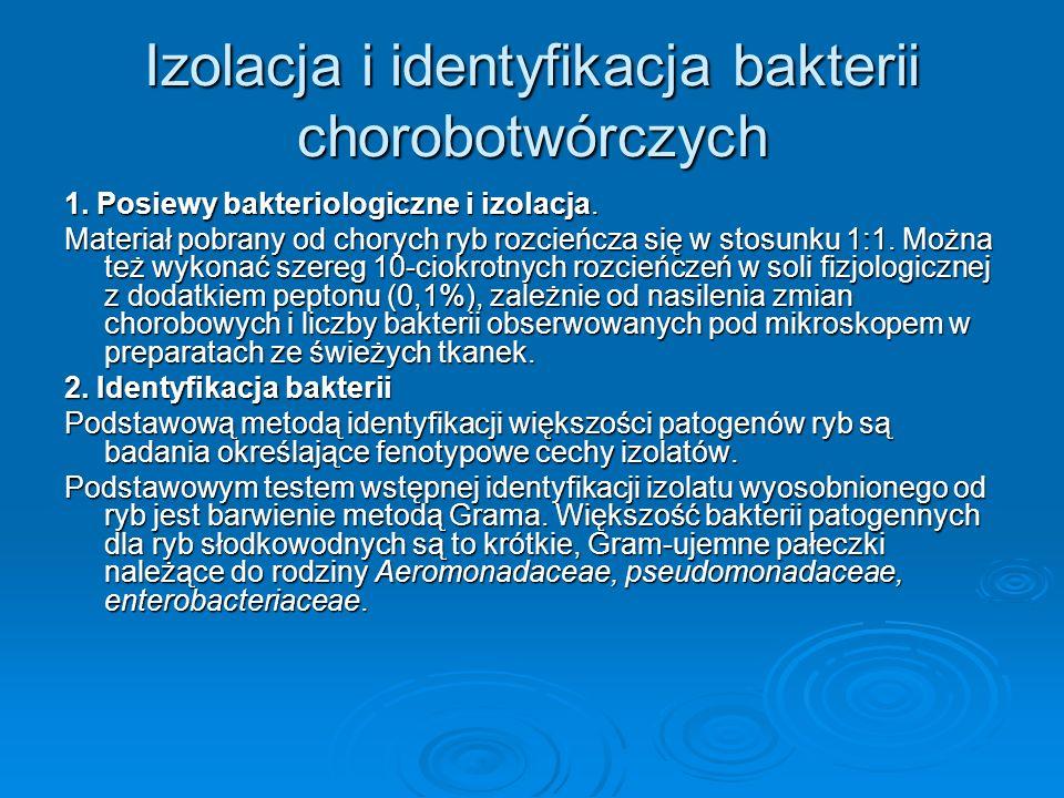 Izolacja i identyfikacja bakterii chorobotwórczych 1. Posiewy bakteriologiczne i izolacja. Materiał pobrany od chorych ryb rozcieńcza się w stosunku 1