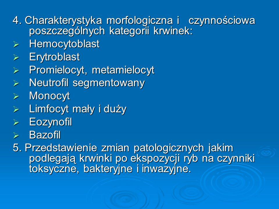 4. Charakterystyka morfologiczna i czynnościowa poszczególnych kategorii krwinek: Hemocytoblast Hemocytoblast Erytroblast Erytroblast Promielocyt, met
