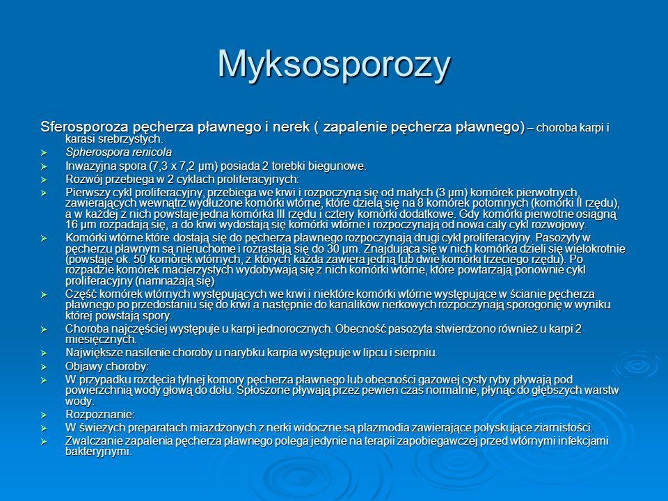 Myksosporozy Sferosporoza pęcherza pławnego i nerek ( zapalenie pęcherza pławnego) – choroba karpi i karasi srebrzystych. Spherospora renicola Spheros