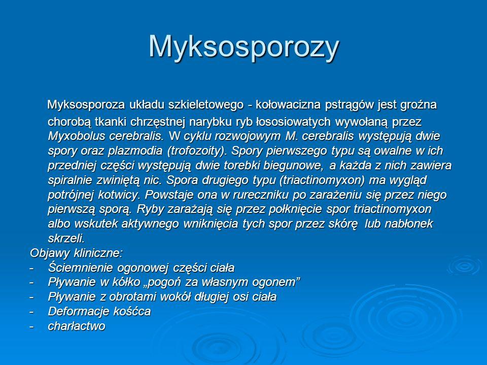 Myksosporozy Myksosporoza układu szkieletowego - kołowacizna pstrągów jest groźna chorobą tkanki chrzęstnej narybku ryb łososiowatych wywołaną przez M