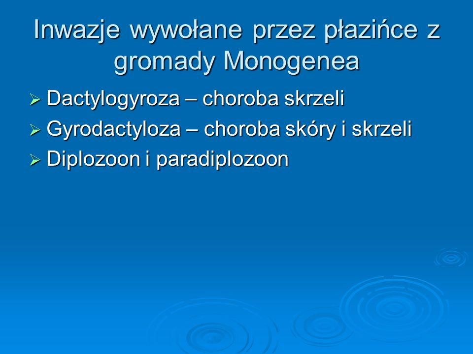 Inwazje wywołane przez płazińce z gromady Monogenea Dactylogyroza – choroba skrzeli Dactylogyroza – choroba skrzeli Gyrodactyloza – choroba skóry i sk