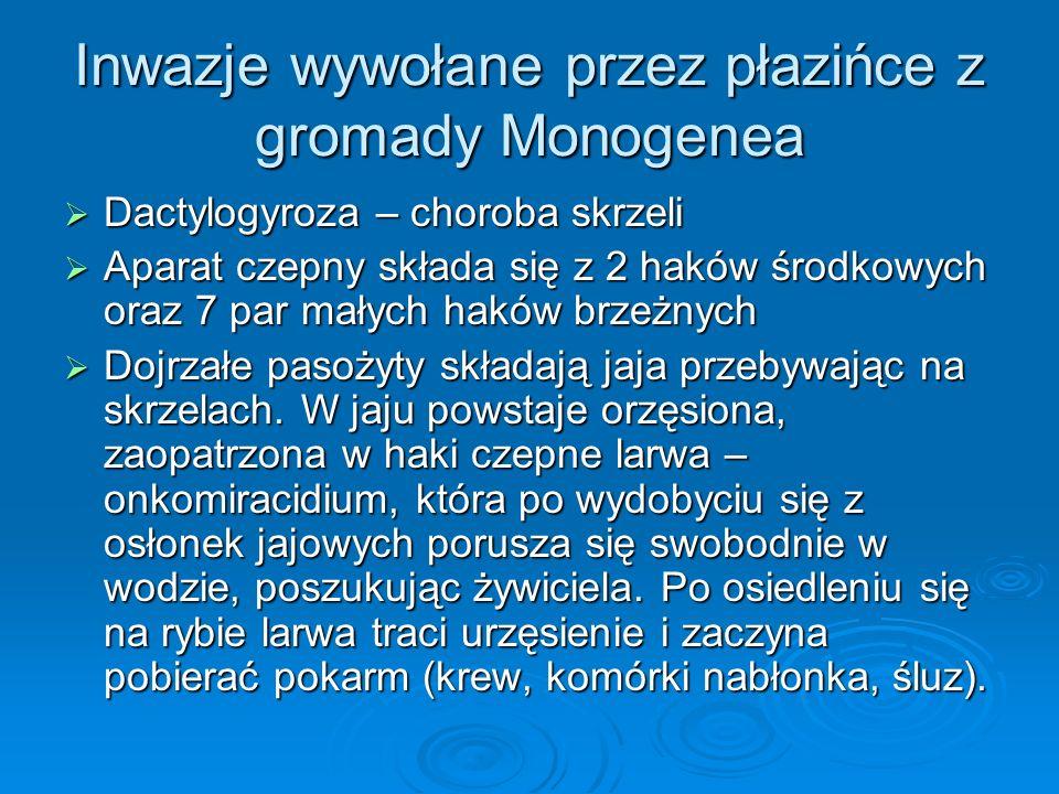 Inwazje wywołane przez płazińce z gromady Monogenea Dactylogyroza – choroba skrzeli Dactylogyroza – choroba skrzeli Aparat czepny składa się z 2 haków