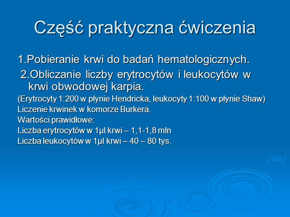 Część praktyczna ćwiczenia 1.Pobieranie krwi do badań hematologicznych. 2.Obliczanie liczby erytrocytów i leukocytów w krwi obwodowej karpia. 2.Oblicz