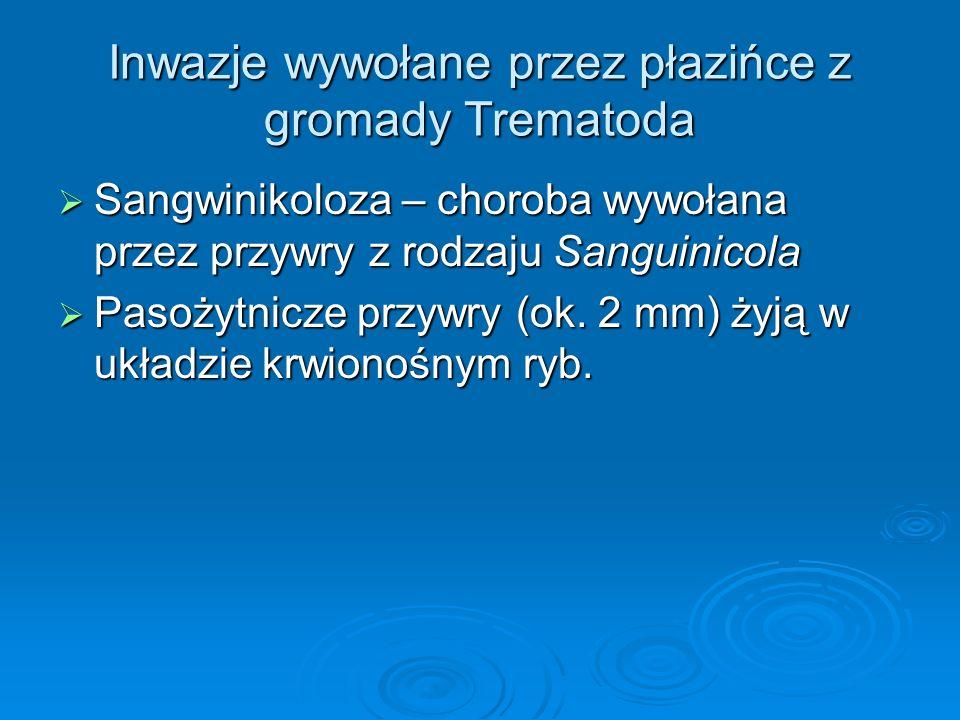 Inwazje wywołane przez płazińce z gromady Trematoda Sangwinikoloza – choroba wywołana przez przywry z rodzaju Sanguinicola Sangwinikoloza – choroba wy