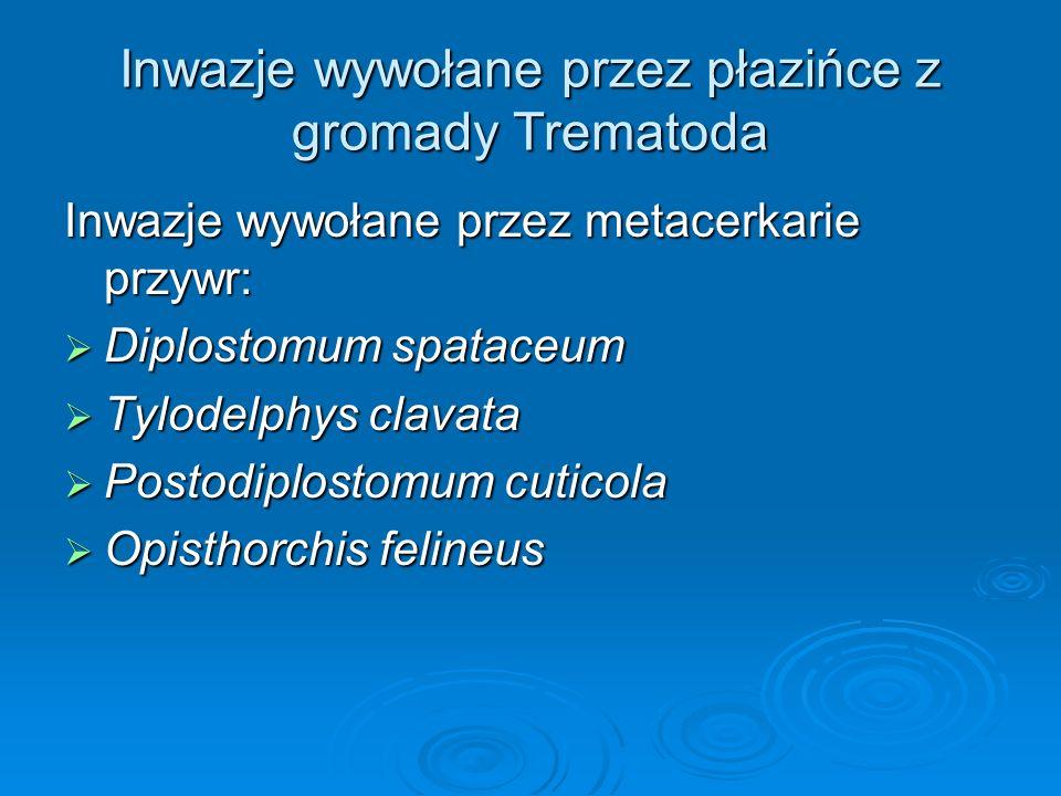Inwazje wywołane przez płazińce z gromady Trematoda Inwazje wywołane przez metacerkarie przywr: Diplostomum spataceum Diplostomum spataceum Tylodelphy