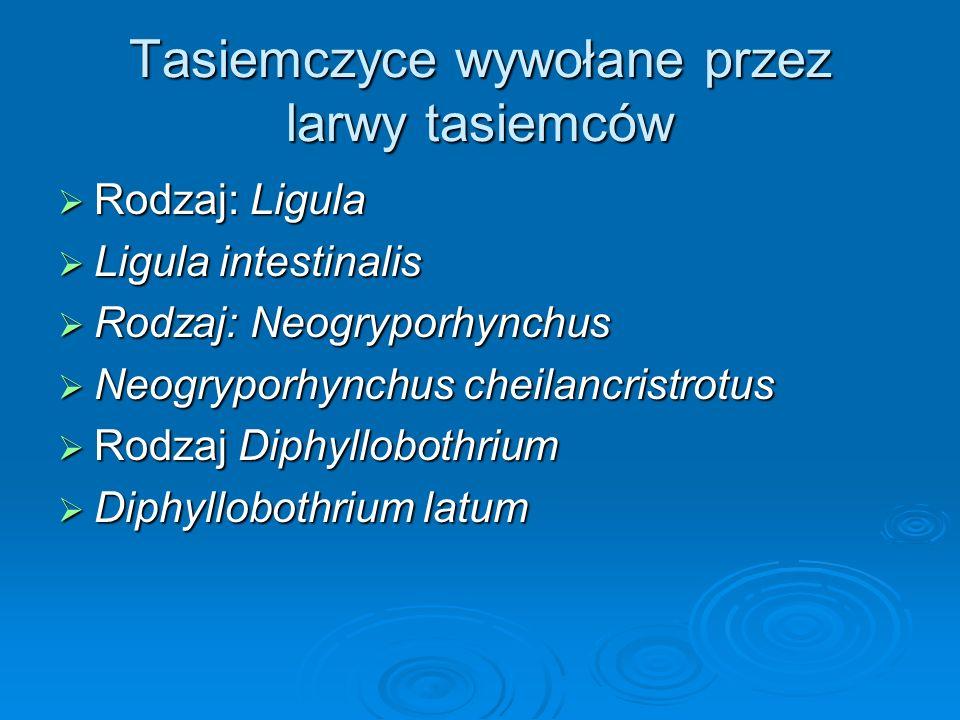 Tasiemczyce wywołane przez larwy tasiemców Rodzaj: Ligula Rodzaj: Ligula Ligula intestinalis Ligula intestinalis Rodzaj: Neogryporhynchus Rodzaj: Neog