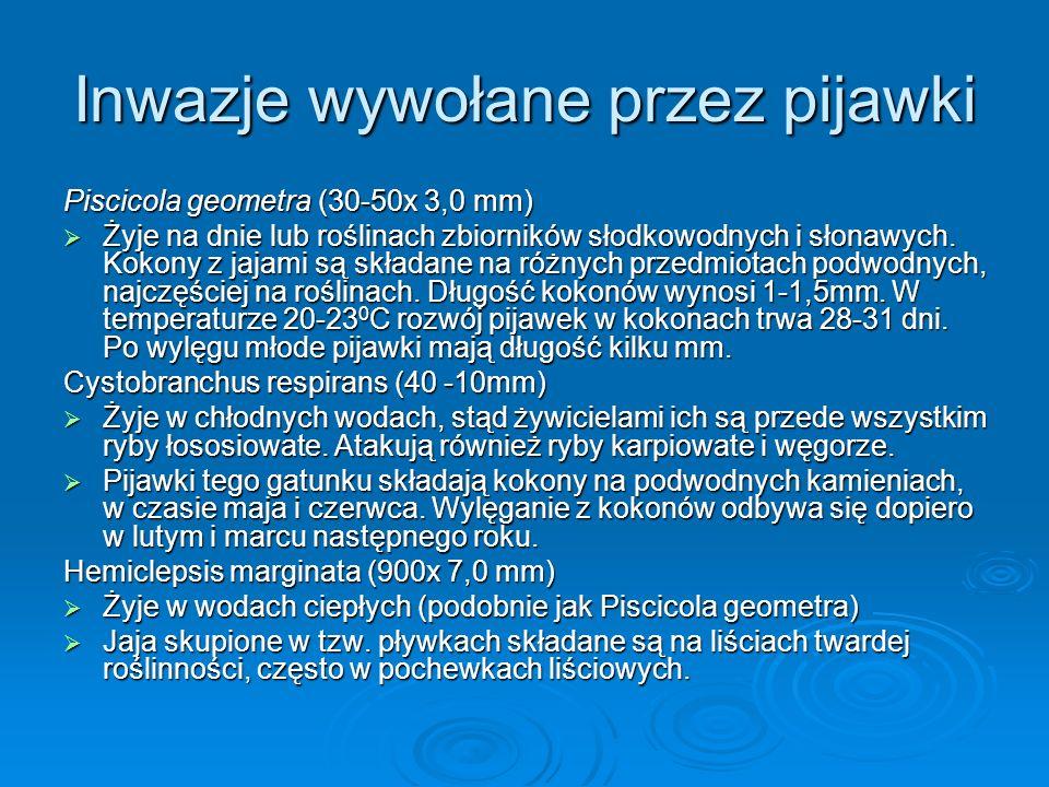 Inwazje wywołane przez pijawki Piscicola geometra (30-50x 3,0 mm) Żyje na dnie lub roślinach zbiorników słodkowodnych i słonawych. Kokony z jajami są