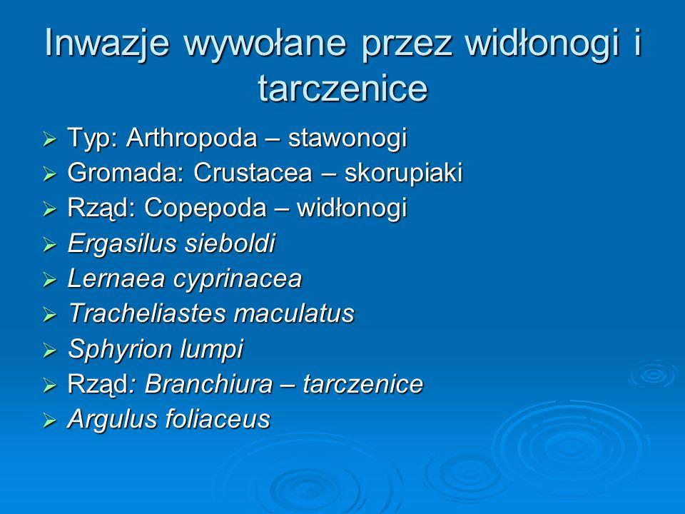 Inwazje wywołane przez widłonogi i tarczenice Typ: Arthropoda – stawonogi Typ: Arthropoda – stawonogi Gromada: Crustacea – skorupiaki Gromada: Crustac