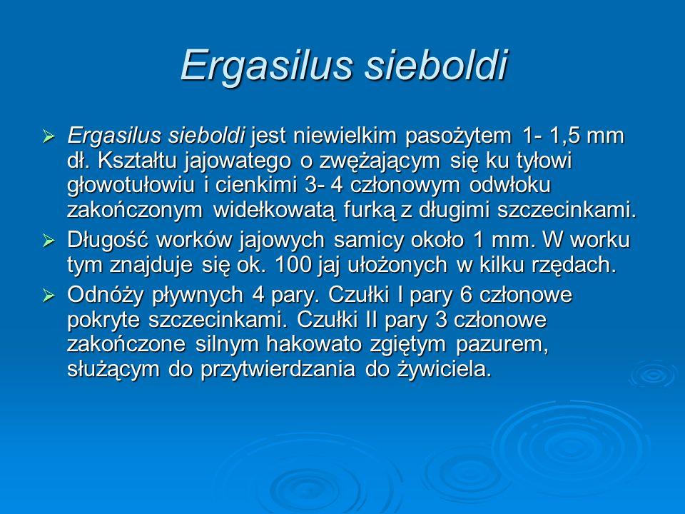 Ergasilus sieboldi Ergasilus sieboldi jest niewielkim pasożytem 1- 1,5 mm dł. Kształtu jajowatego o zwężającym się ku tyłowi głowotułowiu i cienkimi 3