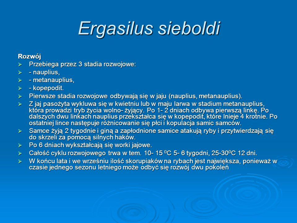 Ergasilus sieboldi Rozwój Przebiega przez 3 stadia rozwojowe: Przebiega przez 3 stadia rozwojowe: - nauplius, - nauplius, - metanauplius, - metanaupli