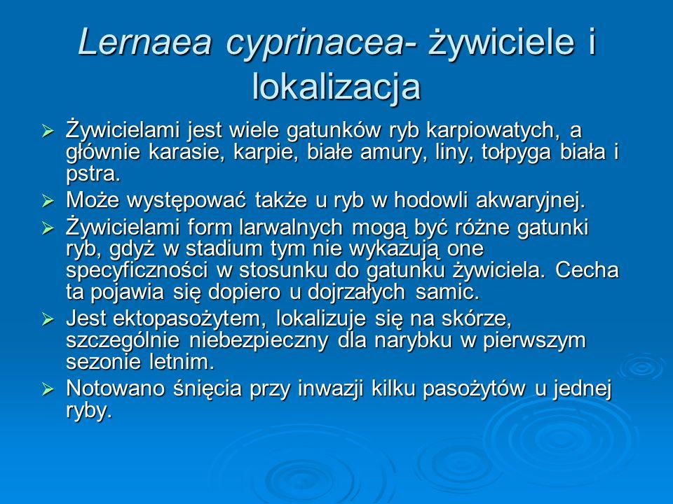Lernaea cyprinacea- żywiciele i lokalizacja Żywicielami jest wiele gatunków ryb karpiowatych, a głównie karasie, karpie, białe amury, liny, tołpyga bi