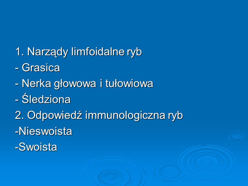 1. Narządy limfoidalne ryb - Grasica - Nerka głowowa i tułowiowa - Śledziona 2. Odpowiedź immunologiczna ryb -Nieswoista-Swoista